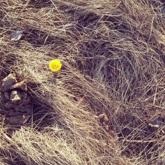kukkajakakka