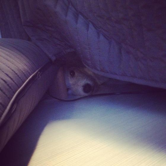 sängynalla